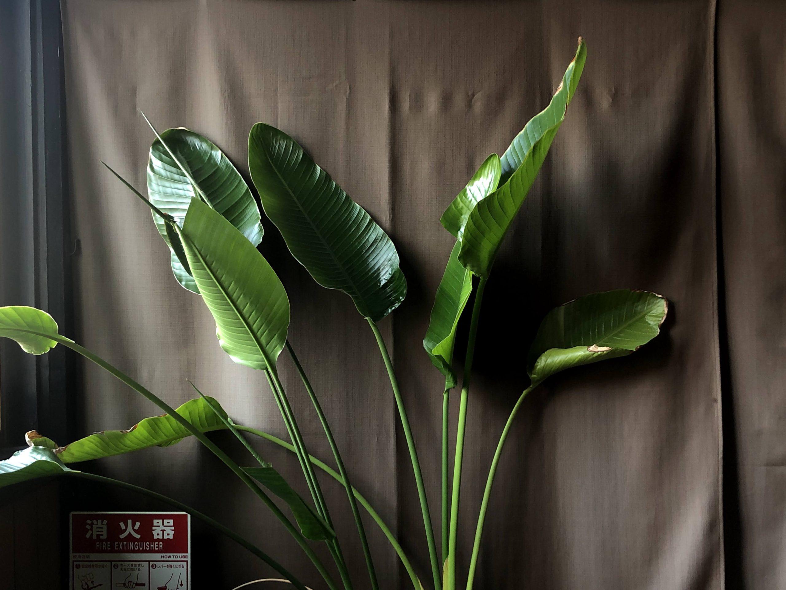 MPAD2020会場中津軒にて「植物と消化器」