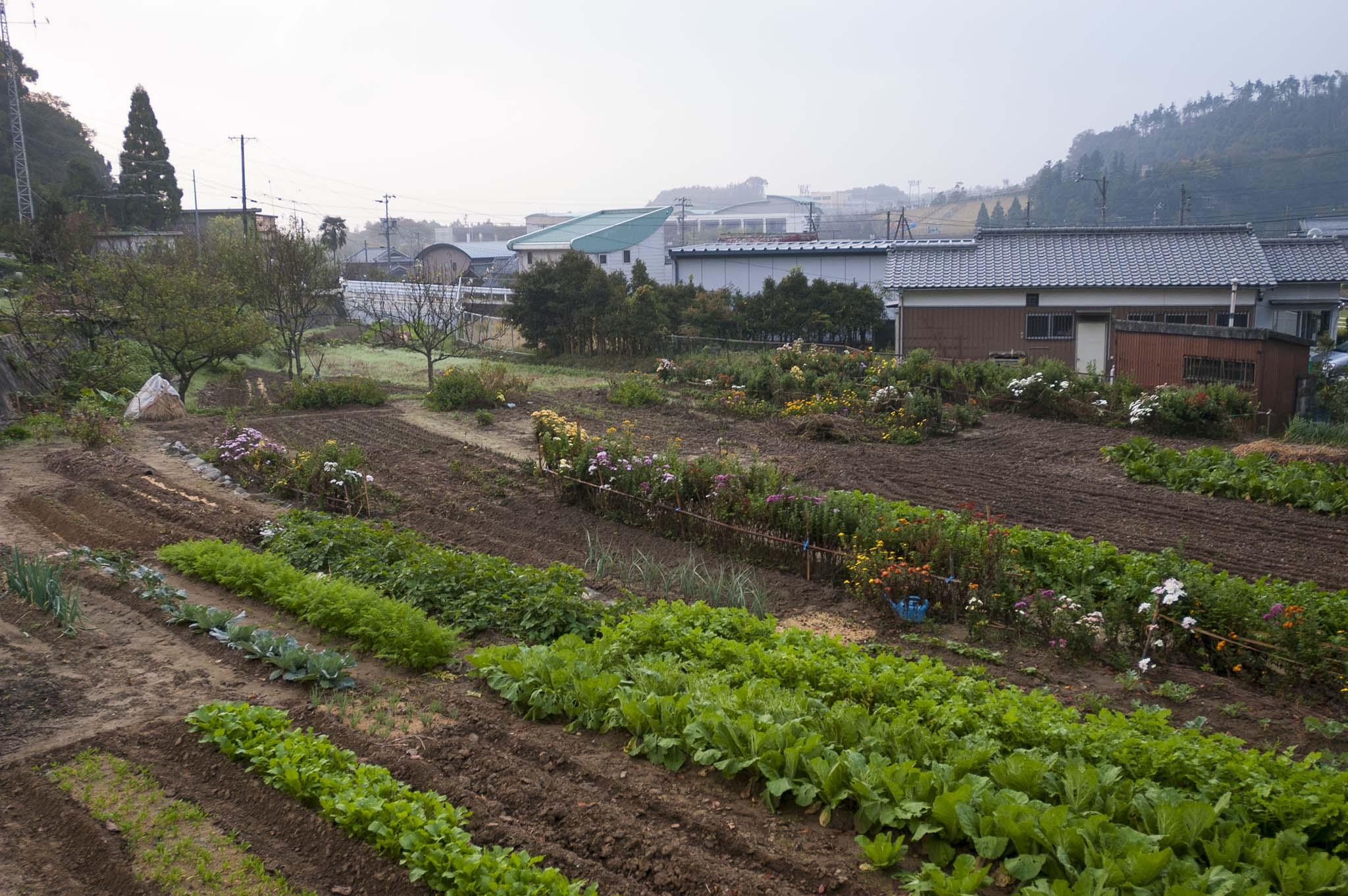 2004年11月三重県津市美里町三郷里山の畑